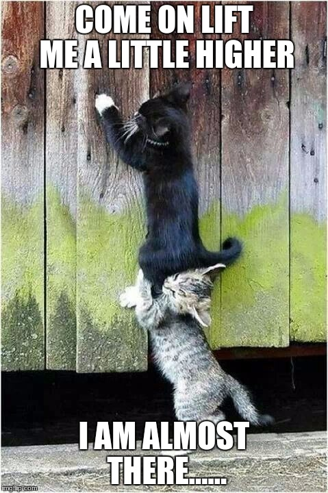 COME ON LIFT ME A LITTLE HIGHER I AM ALMOST THERE...... | image tagged in cats on fence | made w/ Imgflip meme maker