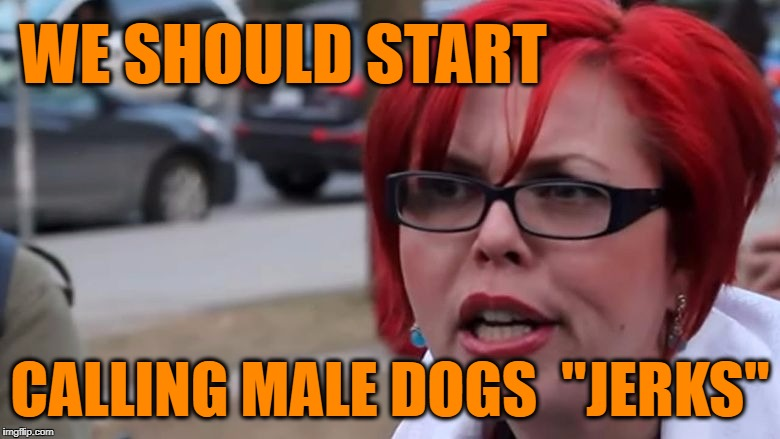 "triggered | WE SHOULD START CALLING MALE DOGS  ""JERKS"" 