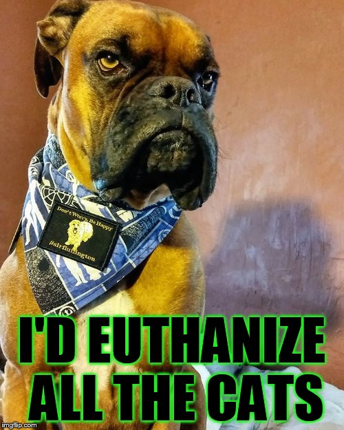 Grumpy Dog | I'D EUTHANIZE ALL THE CATS | image tagged in grumpy dog | made w/ Imgflip meme maker