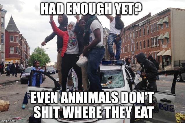 Riot | HAD ENOUGH YET? EVEN ANNIMALS DON'T SHIT WHERE THEY EAT | image tagged in riot | made w/ Imgflip meme maker