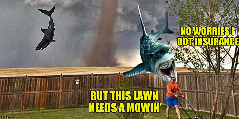NO WORRIES I GOT INSURANCE BUT THIS LAWN NEEDS A MOWIN' | made w/ Imgflip meme maker