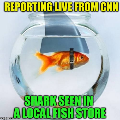 SHARK SEEN IN A LOCAL FISH STORE REPORTING LIVE FROM CNN | made w/ Imgflip meme maker