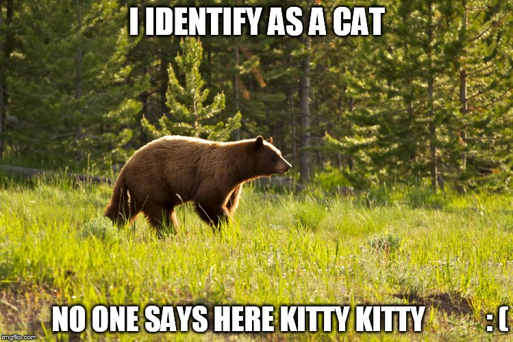 I IDENTIFY AS A CAT NO ONE SAYS HERE KITTY KITTY           : ( | made w/ Imgflip meme maker