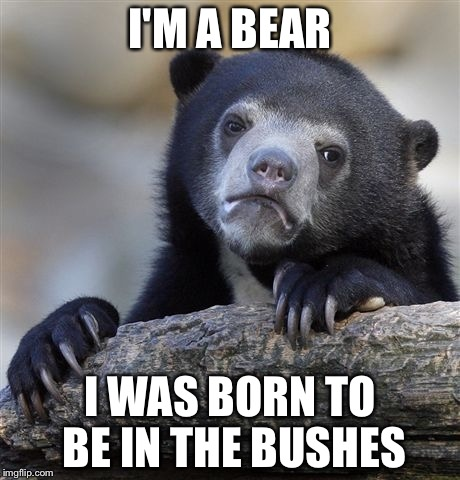 Confession Bear Meme | I'M A BEAR I WAS BORN TO BE IN THE BUSHES | image tagged in memes,confession bear | made w/ Imgflip meme maker