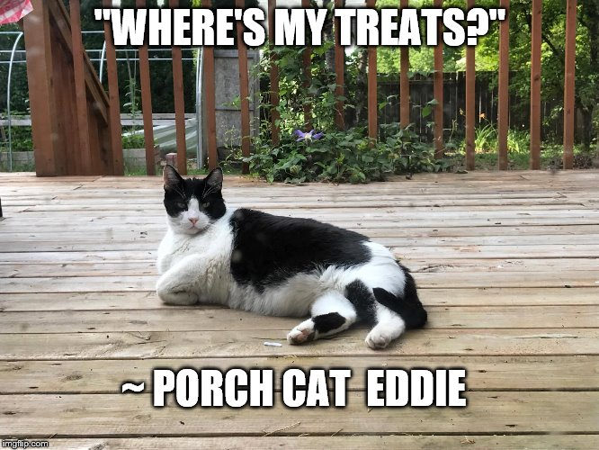 "Porch cat Eddie | ""WHERE'S MY TREATS?"" ~ PORCH CAT  EDDIE 