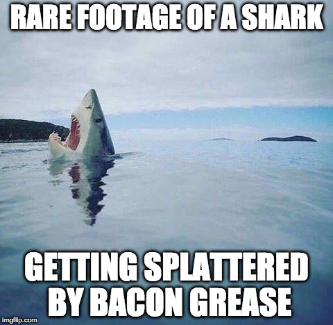 combining Stolen memes week while ushering in Shark week. Plus bacon. | RARE FOOTAGE OF A SHARK GETTING SPLATTERED BY BACON GREASE | image tagged in shark_head_out_of_water,shark week,raydog,iwanttobebacon,iwanttobebaconcom | made w/ Imgflip meme maker