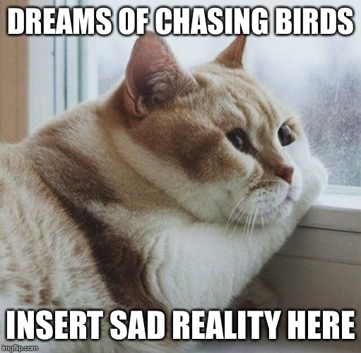 DREAMS OF CHASING BIRDS INSERT SAD REALITY HERE | made w/ Imgflip meme maker