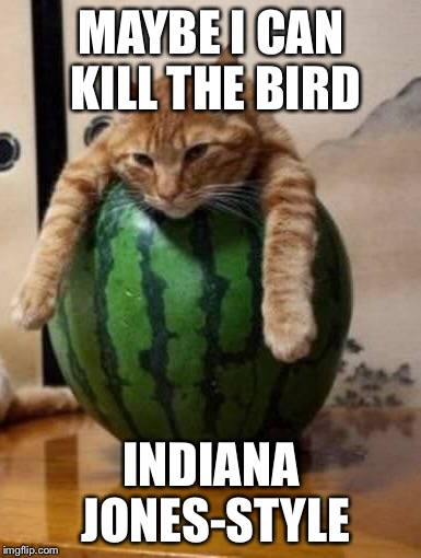 MAYBE I CAN KILL THE BIRD INDIANA JONES-STYLE | made w/ Imgflip meme maker