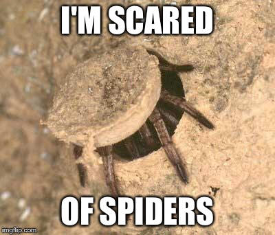 I'M SCARED OF SPIDERS | made w/ Imgflip meme maker