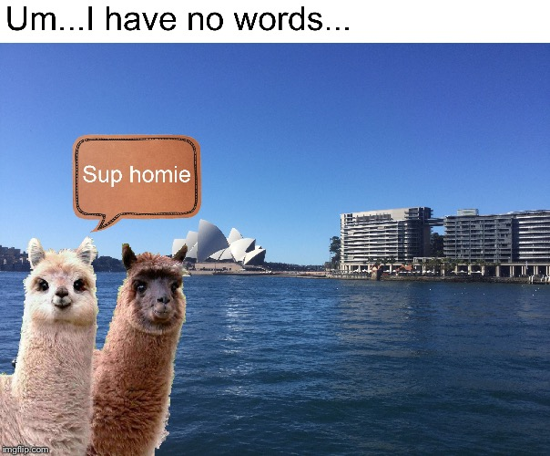 What is happening to the world... | image tagged in sydney,llamas,photoshop | made w/ Imgflip meme maker