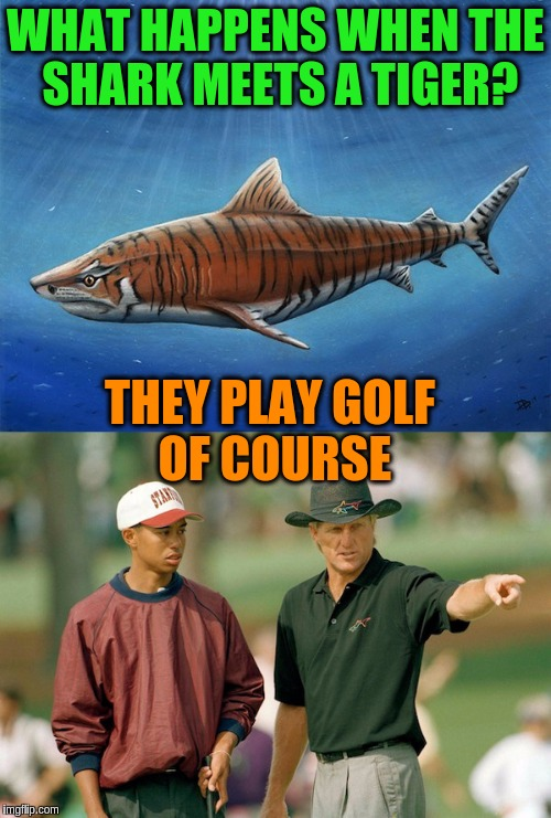 What happens when the Shark meets a tiger? | WHAT HAPPENS WHEN THE SHARK MEETS A TIGER? THEY PLAY GOLF OF COURSE | image tagged in memes,funny,bad pun,shark week,tiger week,golf | made w/ Imgflip meme maker