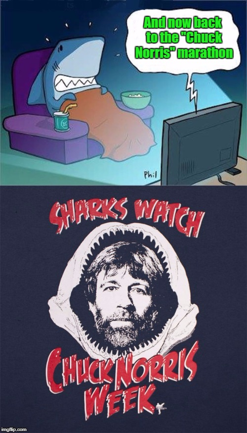 "Shark Week...A Raydog & Discovery Channel Event | And now back to the ""Chuck Norris"" marathon 
