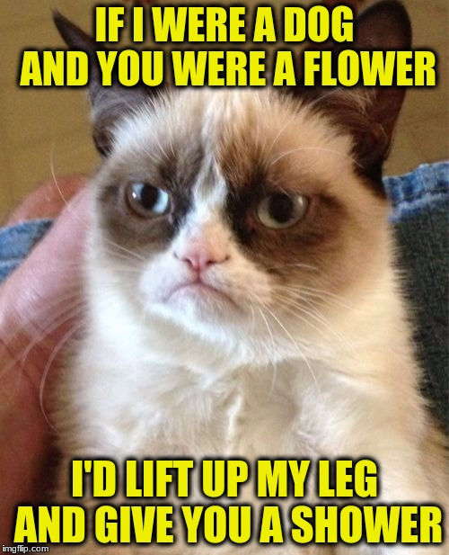 Grumpy Cat Meme | IF I WERE A DOG AND YOU WERE A FLOWER I'D LIFT UP MY LEG AND GIVE YOU A SHOWER | image tagged in memes,grumpy cat | made w/ Imgflip meme maker