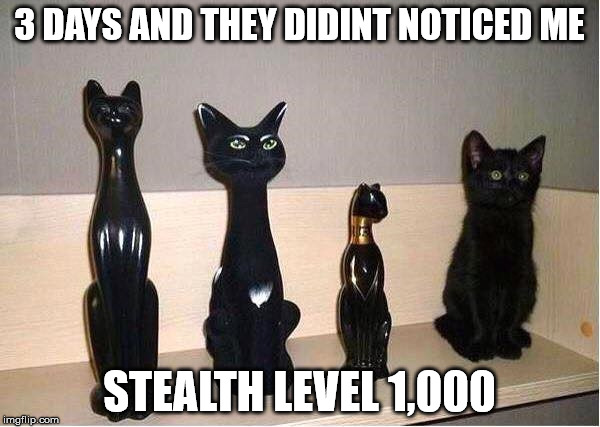 Cache Cat | 3 DAYS AND THEY DIDINT NOTICED ME STEALTH LEVEL 1,000 | image tagged in cache cat | made w/ Imgflip meme maker