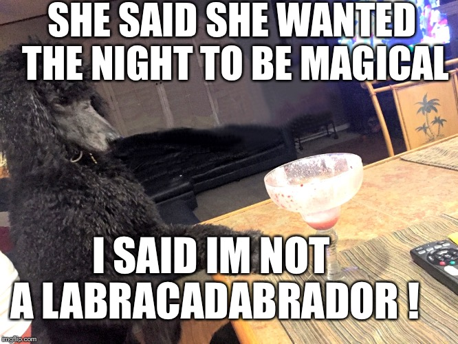 Im not Mr. Poof | SHE SAID SHE WANTED THE NIGHT TO BE MAGICAL I SAID IM NOT A LABRACADABRADOR ! | image tagged in noah gump at bar,funny joke meme,run noah run,mtr602,youtube | made w/ Imgflip meme maker