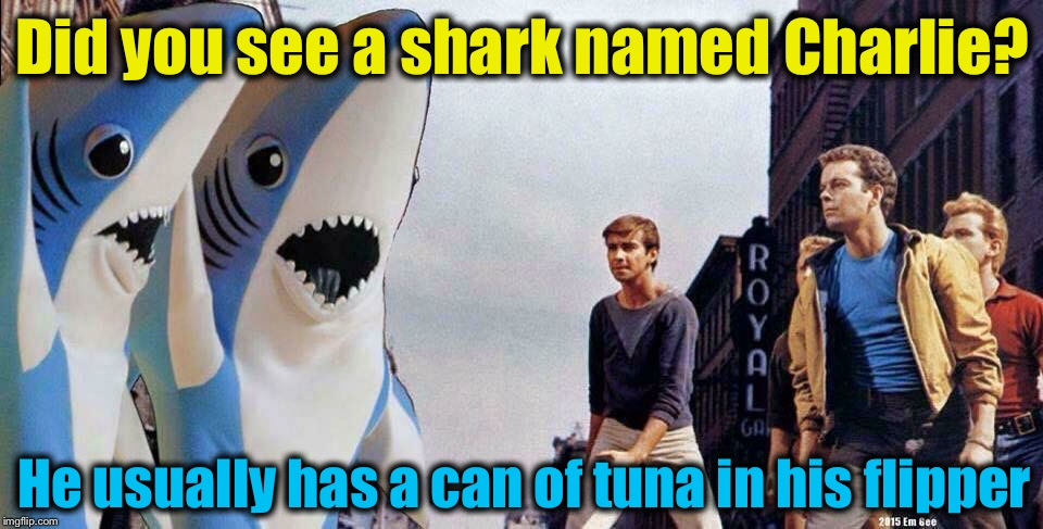 Did you see a shark named Charlie? He usually has a can of tuna in his flipper | made w/ Imgflip meme maker
