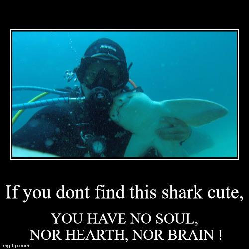 Shark WEEK ! | If you dont find this shark cute, | YOU HAVE NO SOUL, NOR HEARTH, NOR BRAIN ! | image tagged in funny,demotivationals,shark week,cute,faith in humanity | made w/ Imgflip demotivational maker