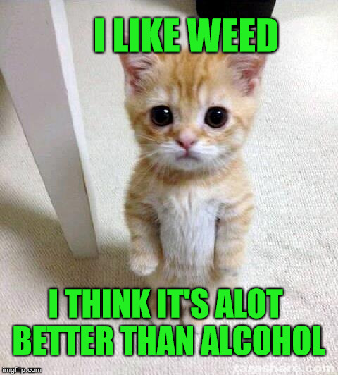 What do you think ? | I LIKE WEED I THINK IT'S ALOT BETTER THAN ALCOHOL | image tagged in memes,cute cat,animal,weed,alcohol,cat | made w/ Imgflip meme maker