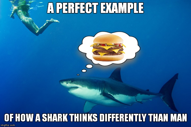 Shark week a Raydog event! | A PERFECT EXAMPLE OF HOW A SHARK THINKS DIFFERENTLY THAN MAN | image tagged in shark week,raydog,cheeseburger,hottie | made w/ Imgflip meme maker