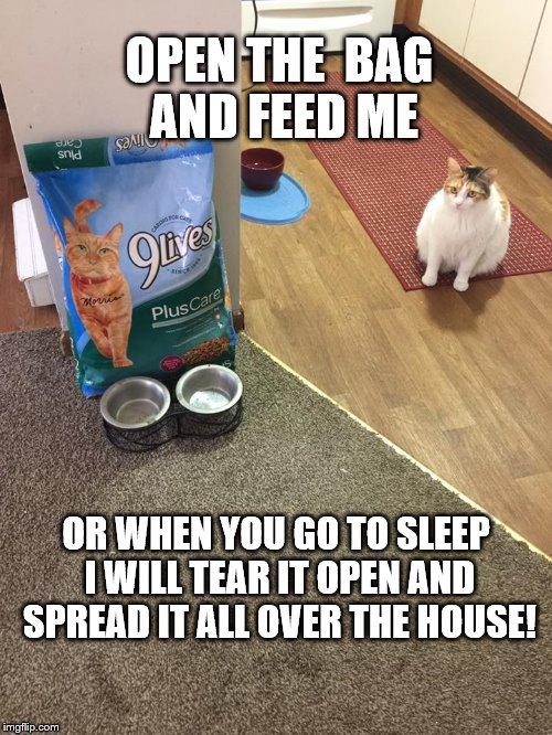 Feed me | OPEN THE  BAG AND FEED ME OR WHEN YOU GO TO SLEEP I WILL TEAR IT OPEN AND SPREAD IT ALL OVER THE HOUSE! | image tagged in funny cat meme | made w/ Imgflip meme maker