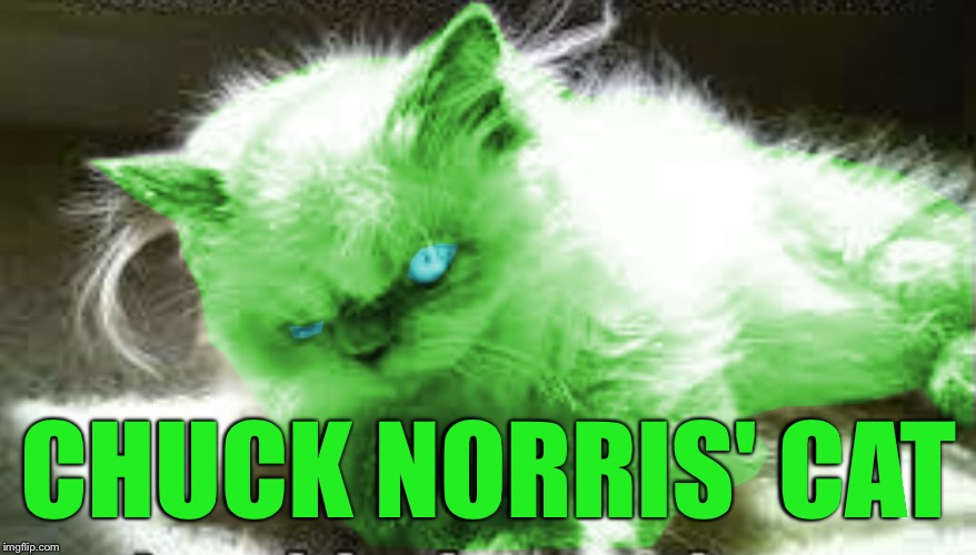 mad raycat | CHUCK NORRIS' CAT | image tagged in mad raycat | made w/ Imgflip meme maker