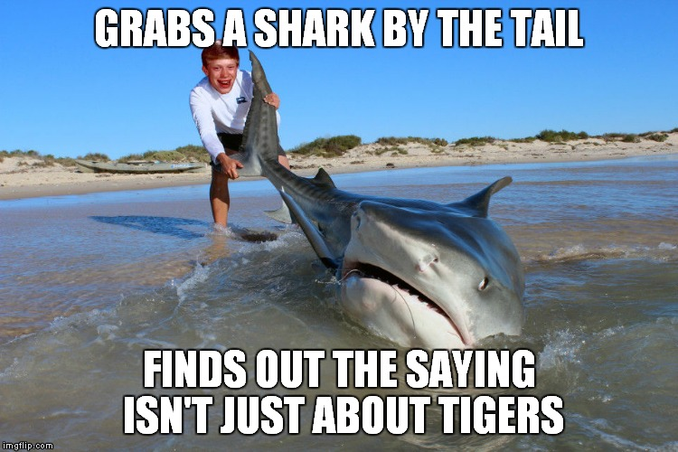 Shark and Tiger week!! | GRABS A SHARK BY THE TAIL FINDS OUT THE SAYING ISN'T JUST ABOUT TIGERS | image tagged in bad luck brian,shark week,tiger week | made w/ Imgflip meme maker