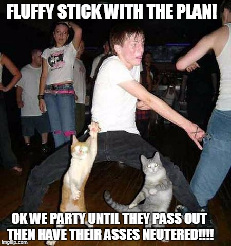 Cats Dancing | FLUFFY STICK WITH THE PLAN! OK WE PARTY UNTIL THEY PASS OUT THEN HAVE THEIR ASSES NEUTERED!!!! | image tagged in cats dancing | made w/ Imgflip meme maker