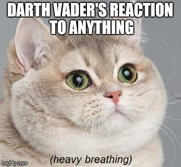 Heavy Breathing Cat | DARTH VADER'S REACTION TO ANYTHING | image tagged in memes,heavy breathing cat,star wars | made w/ Imgflip meme maker