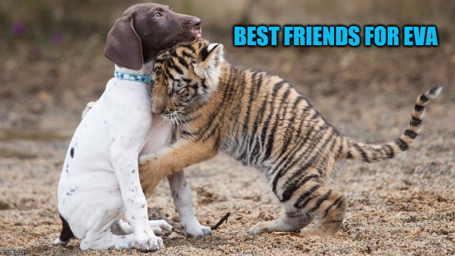 Baby Tiger Hug for Tiger Week (a TigerLegend1046 Event) | BEST FRIENDS FOR EVA | image tagged in memes,tiger week,animals,cute,dogs,cute animals | made w/ Imgflip meme maker