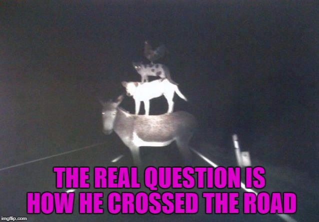 THE REAL QUESTION IS HOW HE CROSSED THE ROAD | made w/ Imgflip meme maker
