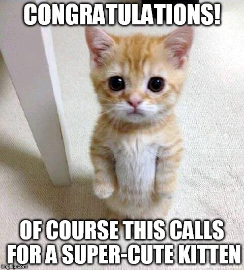Cute Cat Meme | CONGRATULATIONS! OF COURSE THIS CALLS FOR A SUPER-CUTE KITTEN | image tagged in memes,cute cat | made w/ Imgflip meme maker
