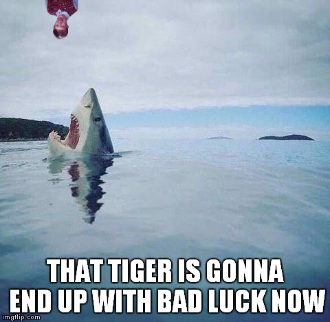 THAT TIGER IS GONNA END UP WITH BAD LUCK NOW | made w/ Imgflip meme maker