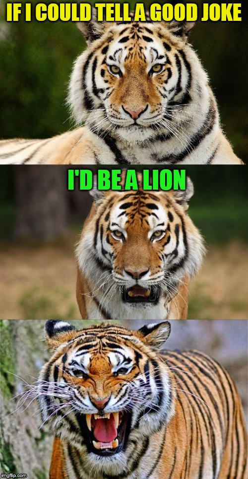 Tiger Puns | IF I COULD TELL A GOOD JOKE I'D BE A LION | image tagged in tiger puns | made w/ Imgflip meme maker