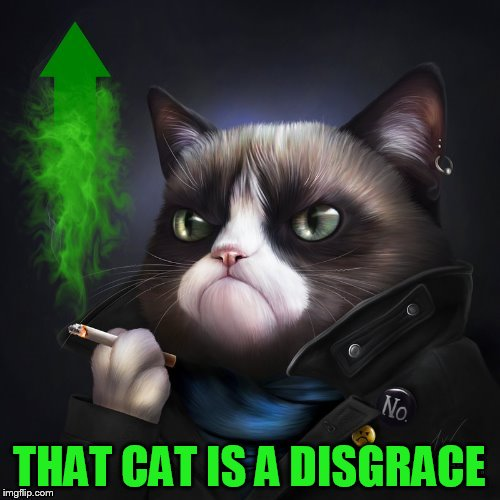 THAT CAT IS A DISGRACE | made w/ Imgflip meme maker