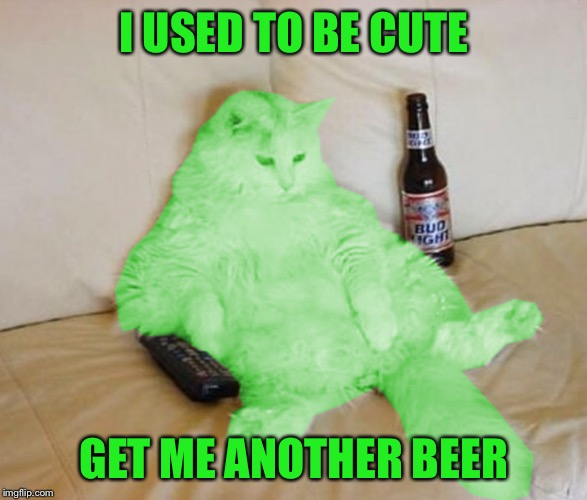 RayCat Chillin' | I USED TO BE CUTE GET ME ANOTHER BEER | image tagged in raycat chillin' | made w/ Imgflip meme maker