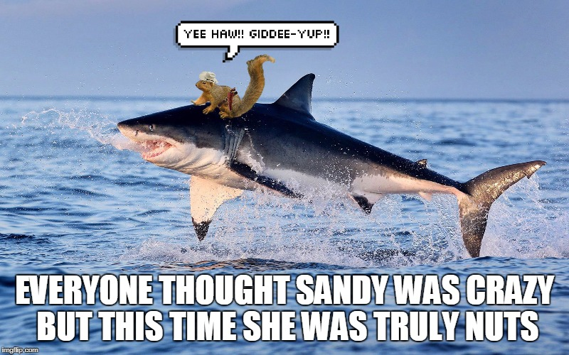 Sandy the Squirrel goes for 8 Seconds!  Shark Week! A Raydog and Discovery Channel Event July 23rd - 30th | EVERYONE THOUGHT SANDY WAS CRAZY BUT THIS TIME SHE WAS TRULY NUTS | image tagged in sandy cheeks,shark week,spongebob squarepants,funny,sharks,memes | made w/ Imgflip meme maker