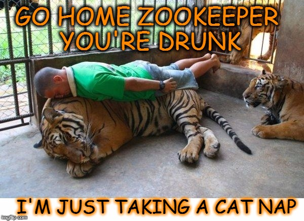 I got the eye of the tired  | GO HOME ZOOKEEPER YOU'RE DRUNK I'M JUST TAKING A CAT NAP | image tagged in tiger week,go home you're drunk,memes,funny,tiger | made w/ Imgflip meme maker