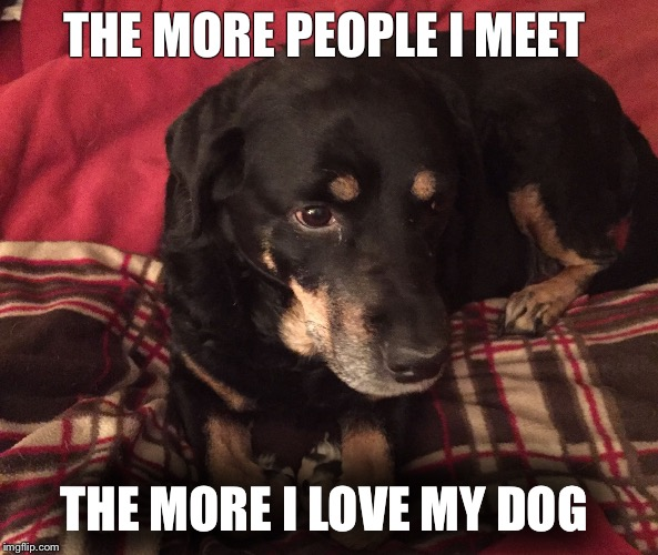 Dogs are awesome | THE MORE PEOPLE I MEET THE MORE I LOVE MY DOG | image tagged in dogs | made w/ Imgflip meme maker