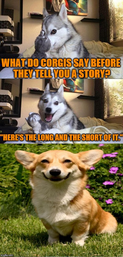 "Bad Pun Dog Meme | WHAT DO CORGIS SAY BEFORE THEY TELL YOU A STORY? ""HERE'S THE LONG AND THE SHORT OF IT."" 