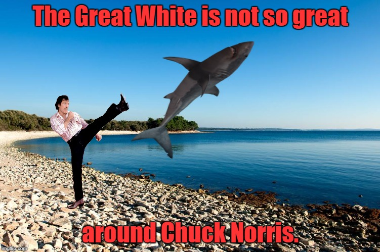 Chuck Norris Vs. Shark Week  | The Great White is not so great around Chuck Norris. | image tagged in chuck norris,shark week,memes | made w/ Imgflip meme maker