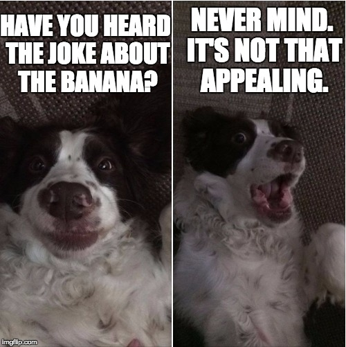 HAVE YOU HEARD THE JOKE ABOUT THE BANANA? NEVER MIND. IT'S NOT THAT APPEALING. | image tagged in seamus joke | made w/ Imgflip meme maker