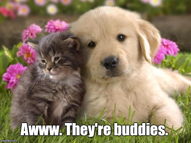 Awww. They're buddies. | made w/ Imgflip meme maker