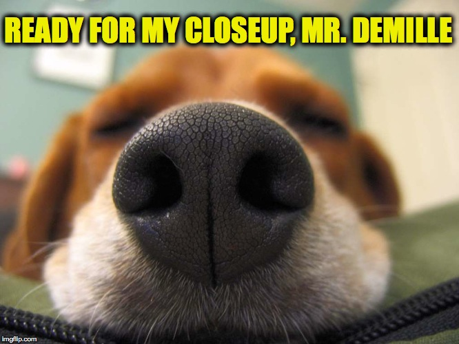 Close Up | READY FOR MY CLOSEUP, MR. DEMILLE | image tagged in the nose | made w/ Imgflip meme maker