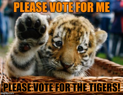 PLEASE VOTE FOR ME PLEASE VOTE FOR THE TIGERS! | made w/ Imgflip meme maker