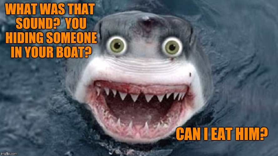 Overly Attached Shark for Shark Week (Raydog and Discovery Channel Event) | WHAT WAS THAT SOUND?  YOU HIDING SOMEONE IN YOUR BOAT? CAN I EAT HIM? | image tagged in memes,funny,shark week,sharks,overly attached shark | made w/ Imgflip meme maker