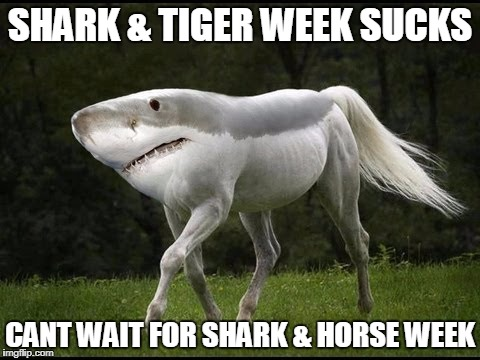 SHARK & TIGER WEEK SUCKS CANT WAIT FOR SHARK & HORSE WEEK | image tagged in landshark | made w/ Imgflip meme maker