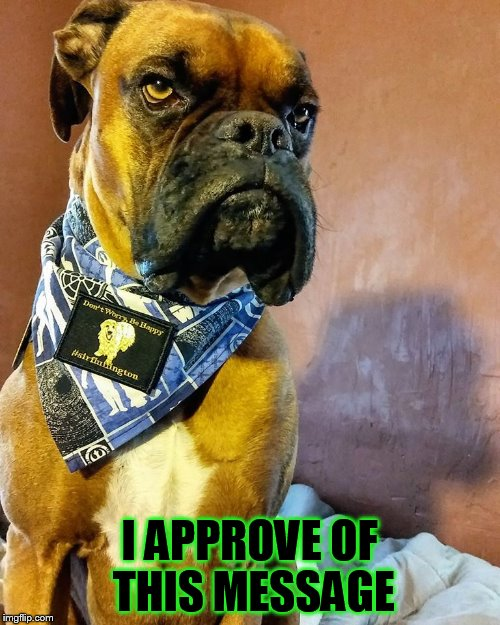 Grumpy Dog | I APPROVE OF THIS MESSAGE | image tagged in grumpy dog | made w/ Imgflip meme maker
