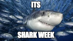 ITS SHARK WEEK | image tagged in shark week,sharks | made w/ Imgflip meme maker