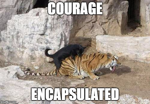 Courage | COURAGE ENCAPSULATED | image tagged in tiger week | made w/ Imgflip meme maker