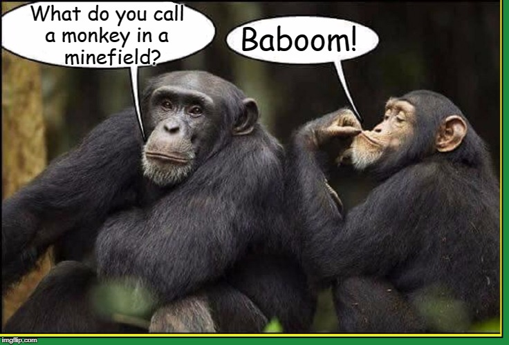 The Old Exploding Monkey Joke, | What do you call a monkey in a      minefield? Baboom! | image tagged in vince vance,monkey jokes,animal meme,baboon,the old exploding monkey joke,monkey business | made w/ Imgflip meme maker